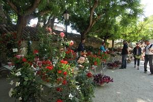 floralie 300 2